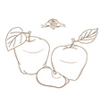 Outline hand drawn apple flat style thin l vector image vector image