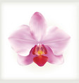 Pink Orchid flower icon vector image