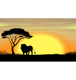 a lion under tree vector image vector image