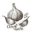 garlic logo design template fresh vector image