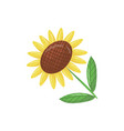 cartoon icon of beautiful sunflower with green vector image