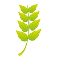 leaf plant nature isolated icon vector image