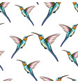 pattern exotic tropical humming bird vector image vector image