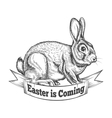 Hand Drawn Easter Bunny vector image