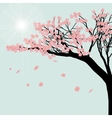 Blooming cherry tree Sakura flowers against the vector image vector image