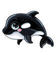 funny cute happy orca isolated vector image