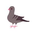 Gray Pigeon Dove bird Cute cartoon character on vector image