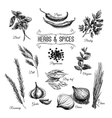 hand drawn set with culinary herbs and vector image
