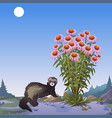 a poster on the theme of wildlife mongoose near vector image vector image
