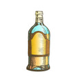 color closed tall classic mexican tequila bottle vector image