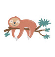 cute sloth on tree branch vector image vector image