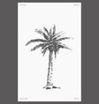 high detail palm tree realistic sketch vector image