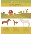horse farming infographic template stallion mare vector image vector image