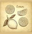 lemon set on old paper background vector image