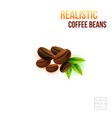 realistic coffee beans and green leafs on a white vector image