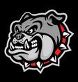 angry head mascot bulldog vector image vector image