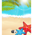 Beach with palm branches and starfishes vector image vector image