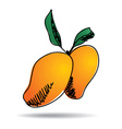 freehand drawing mango icon vector image vector image