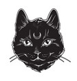 gothic black cat with moon on his forehead vector image vector image