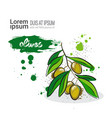 olives hand drawn watercolor vegetables on white vector image vector image