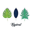 set of summer and trendy tropical leaves vector image vector image