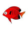cute red sea-fish in cartoon style vector image vector image