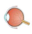 eyeball Stock vector image vector image