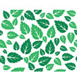 mint fresh leaves template vector image vector image