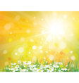spring sunny background vector image vector image