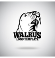 Walrus logo template for sport teams vector image