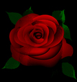 abstract red rose vector image vector image