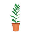 hand drawn zamioculcas room flower in the pot vector image vector image