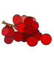 isolated group of plums vector image