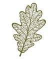 oak leaf isolated on white background vector image vector image