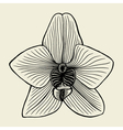 small orchid flower vector image