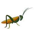 a grasshopper or color vector image vector image