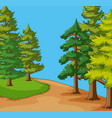 background scene with pine trees in field vector image