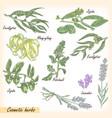 cosmetic herbs set