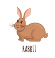 Cute rabbit in flat style vector image vector image
