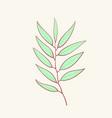 eucalyptus blue agonis thyme asparagus herbal vector image