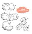 hand drawn sketch apple fruit vector image vector image