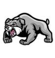 mascot muscle bulldog vector image vector image