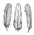 outline feathers vector image
