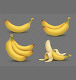 realistic yellow banana bananas bunch 3d vector image
