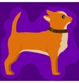 cute little chihuahua dog vector image