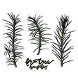 fir-tree branches vector image vector image