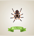 realistic black widow element vector image