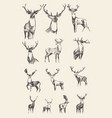 set drawn noble deers sketch vector image