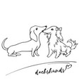 short-haired and long-haired dachshunds get vector image vector image