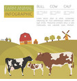 cattle farming infographic template cow bull calf vector image vector image